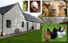Barn Cottage and Stables B&B