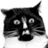 nomaster avatar